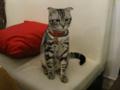 阿猫地攤(Cat Store), #0428