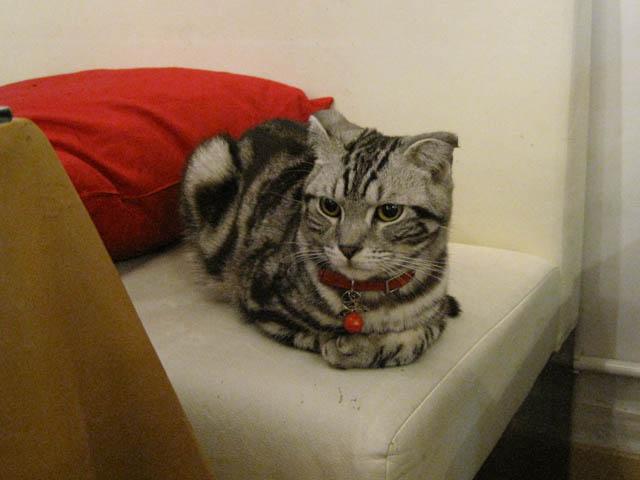 阿猫地攤(Cat Store), #0434