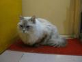 阿猫地攤(Cat Store), #0441