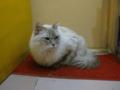阿猫地攤(Cat Store), #0442