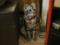 阿猫地攤(Cat Store), #0447