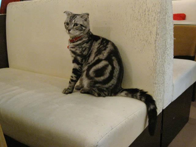 阿猫地攤(Cat Store), #0448