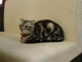 阿猫地攤(Cat Store), #0450