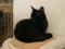 阿猫地攤(Cat Store), #0458