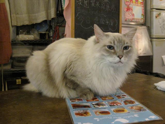 阿猫地攤(Cat Store), #0459