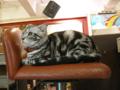 阿猫地攤(Cat Store), #0462