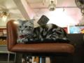阿猫地攤(Cat Store), #0464