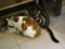 阿猫地攤(Cat Store), #0465