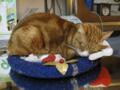阿猫地攤(Cat Store), #0471