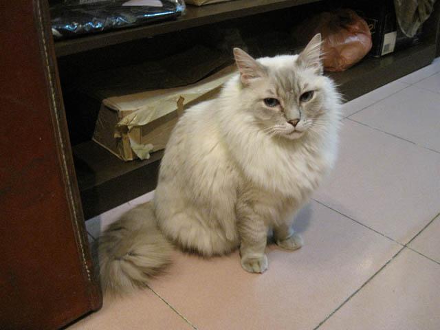 阿猫地攤(Cat Store), #0473