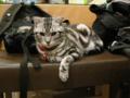 阿猫地攤(Cat Store), #0475