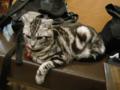 阿猫地攤(Cat Store), #0476