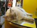 阿猫地攤(Cat Store), #0480