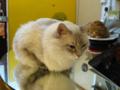 阿猫地攤(Cat Store), #0483
