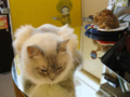 阿猫地攤(Cat Store), #0484
