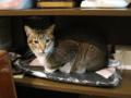 阿猫地攤(Cat Store), #0491