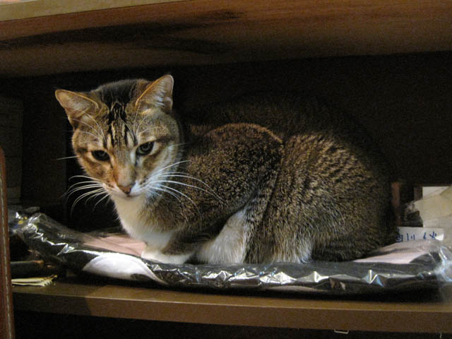 阿猫地攤(Cat Store), #0496