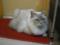 阿猫地攤(Cat Store), #0497