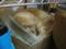 阿猫地攤(Cat Store), #0502