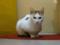 阿猫地攤(Cat Store), #0514