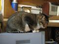 阿猫地攤(Cat Store), #0515