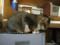 阿猫地攤(Cat Store), #0516