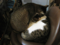阿猫地攤(Cat Store), #0518