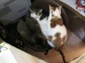 阿猫地攤(Cat Store), #0521