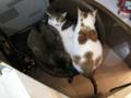 阿猫地攤(Cat Store), #0522