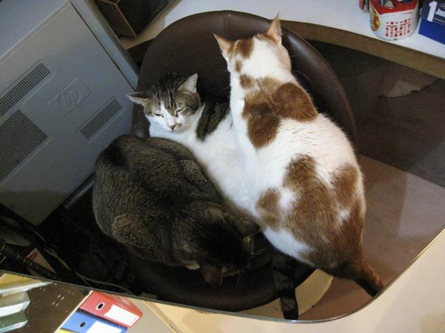 阿猫地攤(Cat Store), #0523