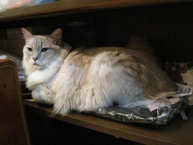 阿猫地攤(Cat Store), #0524