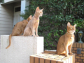 Beatrice, Elisabetta & Caterina, #2646