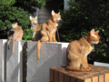Abyssinian Sisters, #3414