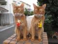 Beatrice & Elisabetta, #3667