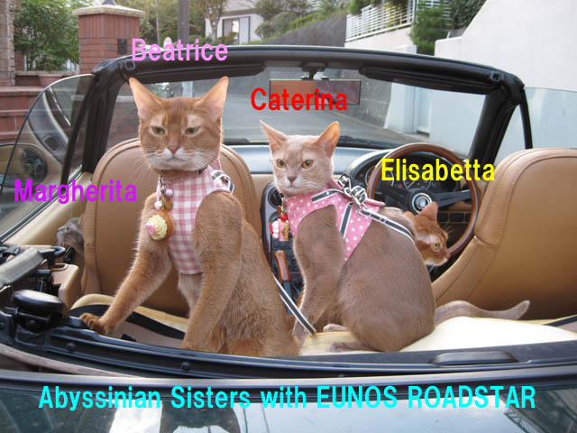 Abyssinian Sisters, #3786 (w names)