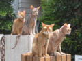 Abyssinian Sisters, #3173
