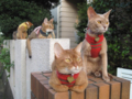 Abyssinian Sisters, #3341