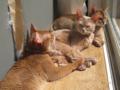 Valentina, Beatrice & Caterina, #2987