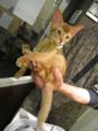 Kitten, #2209