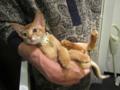 Kitten, #2212
