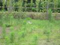 LocalCat20110619, #2703