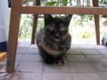 Visitor20110809, #4794