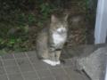 Visitor20110827, #4880