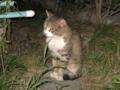 Visitor20110831, #5131