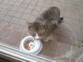 Visitor20120220, #5721