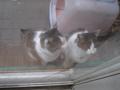 Visitor20121111, #7219
