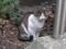 Visitor20121111, #7233