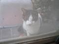 Visitor20121122, #7400
