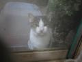 Visitor20121123, #7454