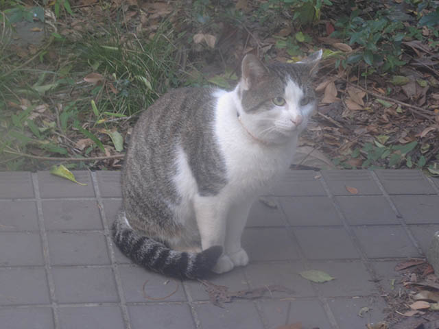 Visitor20121125, #7556